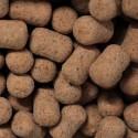 KGB baits Lightweight Hookbaits Epic Spice Dumbell Product